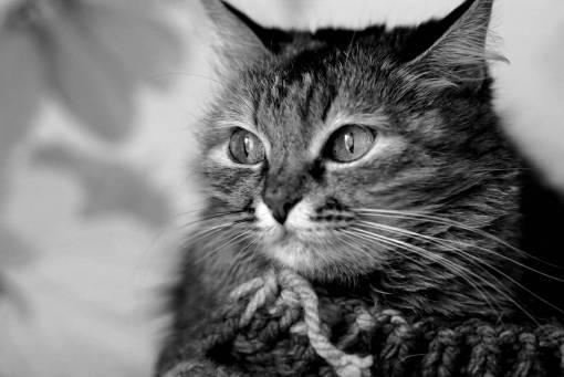 animal  cute  pet  portrait  kitten  fauna