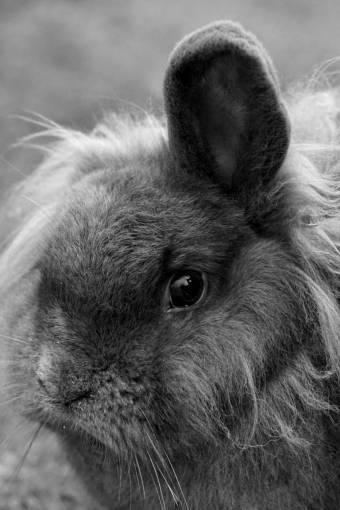 animal  pet  portrait  mammal  fauna  nose