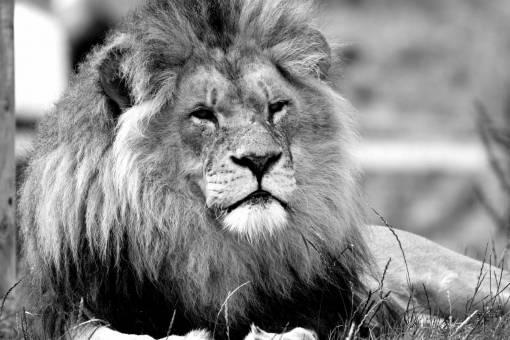 animal  wildlife  wild  fur  portrait