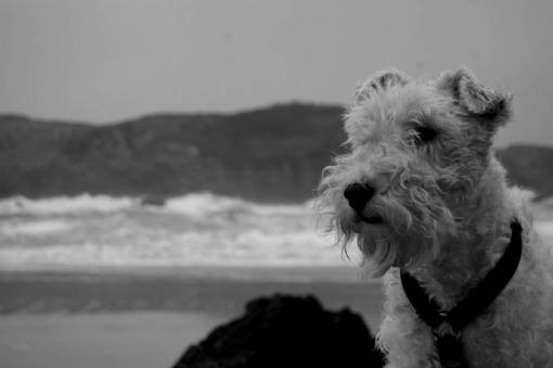 beach  vertebrate  asturias  animal portrait