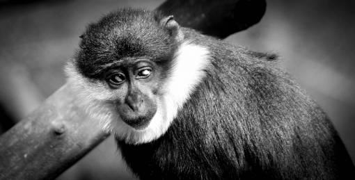 black and white  animal  wildlife  wild
