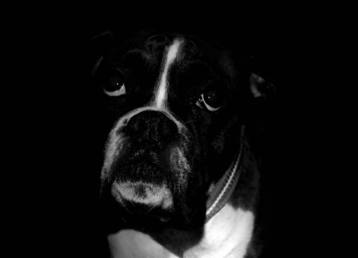 black and white  puppy  animal  cute  canine