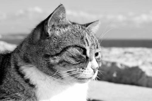 cat  stray  animal  outdoor  portrait  face