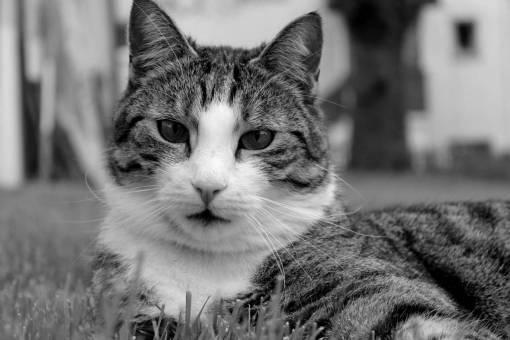 grass  black and white  animal  pet  fur