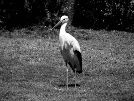 grass  meadow  zoo  spring  beak  fauna