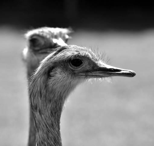 green  beak  ostrich  feather  fauna  close