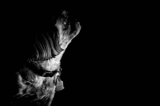 hand  light  black and white  puppy  dog