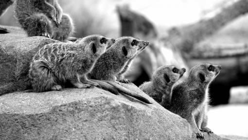 landscape  nature  desert  animal  wildlife