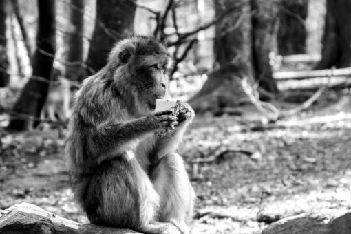 nature  forest  zoo  sitting  mammal  cozy