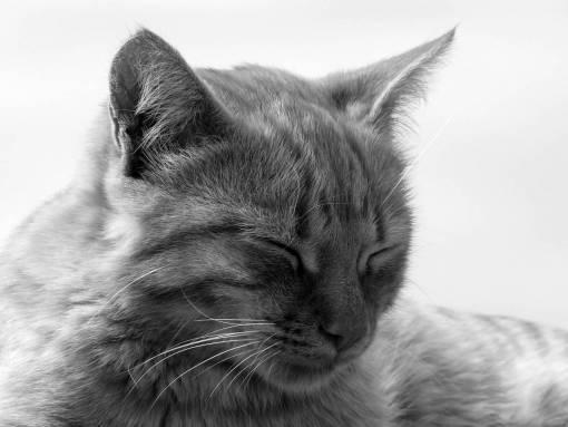 pet  fur  relax  rest  fauna  yawn  close up
