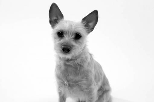 puppy  animal  pet  portrait  vertebrate