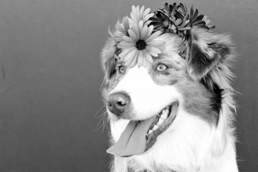 purple  puppy  animal  cute  canine  summer