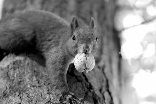 tree  wildlife  pet  autumn  park  mammal