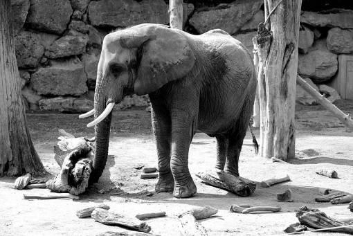 wildlife  zoo  fauna  animal portrait