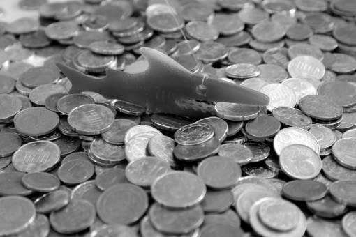 blue  fish  circle  close up  cash  copper