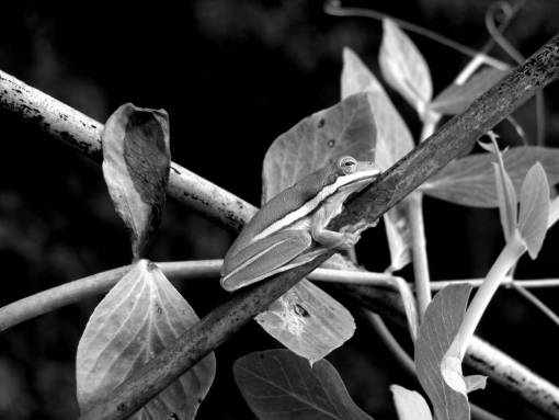 branch  leaf  wildlife  green  jungle