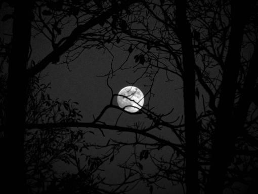 branch  light  sky  night  mystical  dark