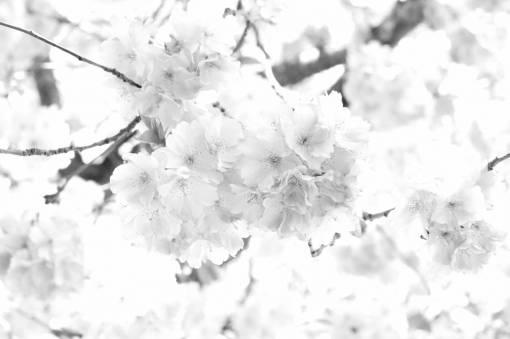 branch  sweet  petal  bloom  food  spring