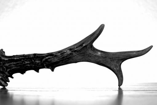 driftwood  forest  branch  wood  horn