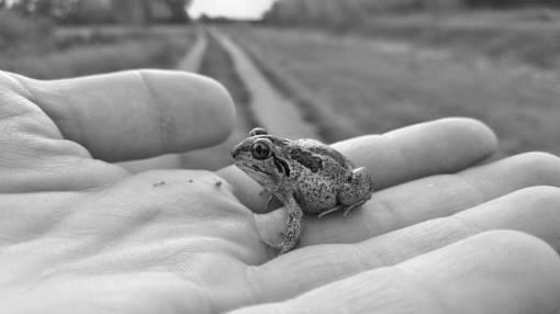 hand  nature  wild  macro  toad  amphibian