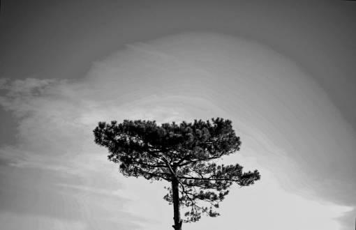 landscape  sky  vintage  beauty  tree