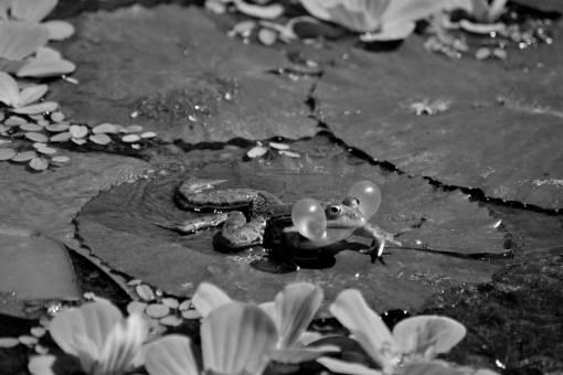 leaf  animal  pond  wildlife  green  jungle