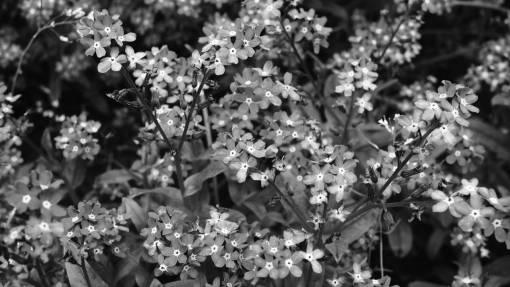 nature  blossom  flower  bloom  floral