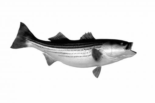nature  sport  wildlife  food  fishing