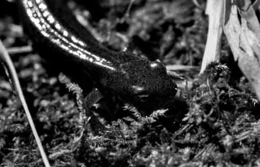 nature  wildlife  macro  frog  amphibian