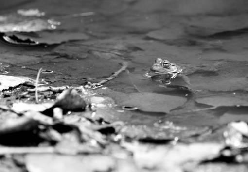 sea  water  nature  leaf  river  photo