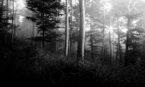 tree  nature  forest  winter  fog  mist