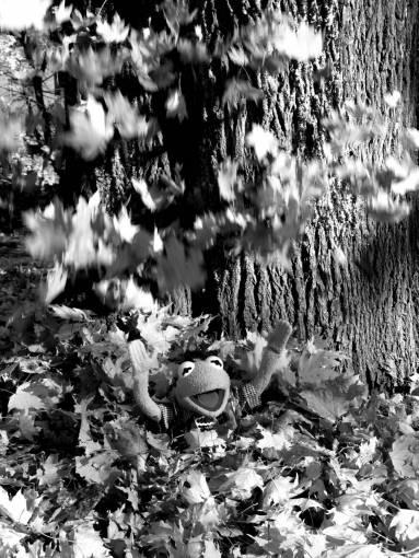 tree  nature  plant  sunlight  leaf  flower