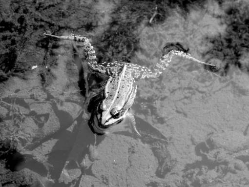 water  leaf  wildlife  reflection  reptile