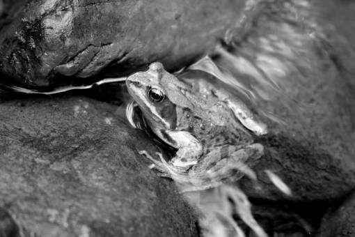 water  nature  animal  river  wildlife  toad