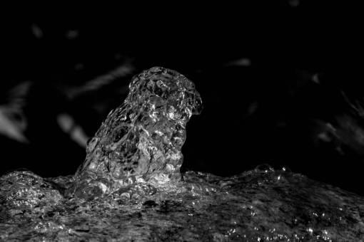 water  nature  stone  wildlife  frog