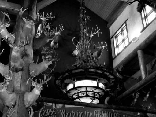 window  wall  male  deer  horn  amusement
