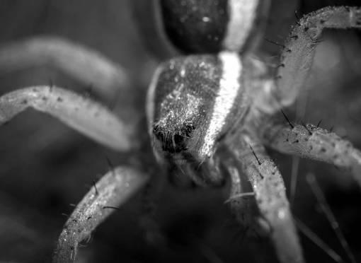 arachnid  portrait  macro photography  close