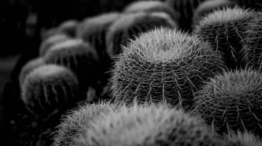 blossom  cactus  flower  bloom  environment