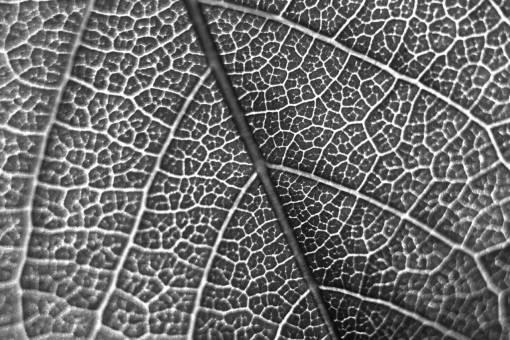 branch  leaf  flower  pattern  line  green