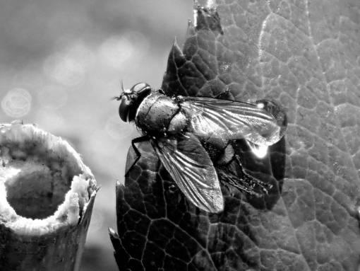 fly  nature  small  animal  bug  pest