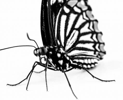 insect  fauna  invertebrate  close up
