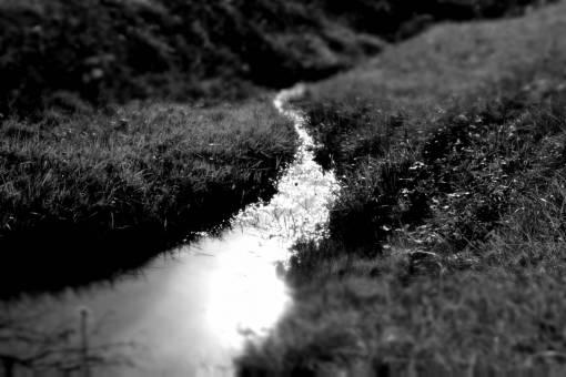 macro photography  zoom  small  focus
