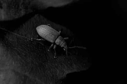 nature  green  insect  fauna  invertebrate