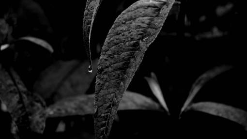 nature  leaf  flower  wet  green  jungle