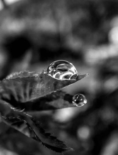 nature  waterdrop  water  leaf  drop  macro