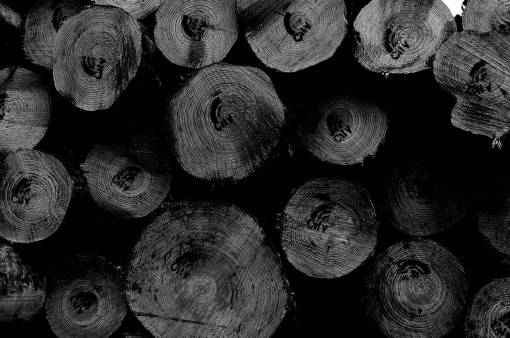wood  trunk  circle  close up  coconut