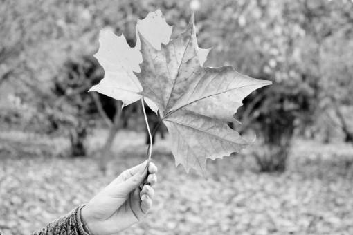 autumn leaves  bright  brown  dry