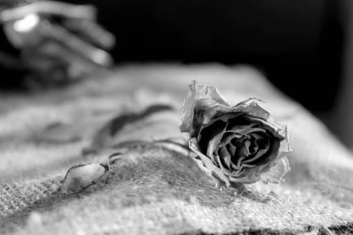 hand  leaf  petal  bouquet  rose  produce