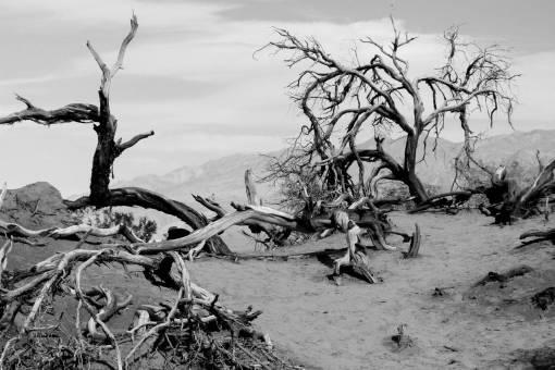 landscape  driftwood  tree  sand  wilderness