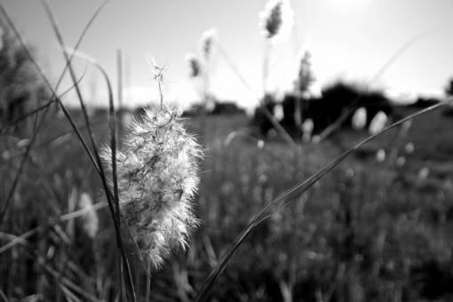 landscape  nature  branch  field  meadow